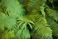 Fern Royalty Free Stock Images - 12201009