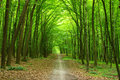 Forest Stock Photography - 12201262