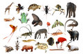 Wild Animal Collection Stock Photography - 12241372