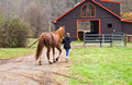 Taking A Horse To The Barn Stock Image - 12292631
