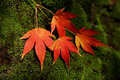 Autum Leaves Royalty Free Stock Image - 1230556