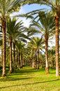 Palm Trees Stock Images - 12321014