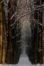 Winter Woods Royalty Free Stock Images - 12343589