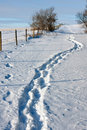 Footsteps In The Snow Royalty Free Stock Photo - 12344095