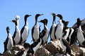 Penguins On Rocks Stock Photos - 12391523