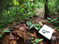 Notebook, Tropical Rainforest Background Stock Photo - 12428610