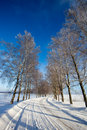 Frost Covered Birch Tree Allay In Winter Royalty Free Stock Photos - 12475208