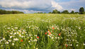 Field Of Flowers Stock Photography - 12475492