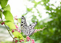 Tropical Butterfly Stock Photo - 12482650