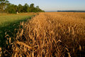 Agricultural Autumn Field Royalty Free Stock Photography - 1259857