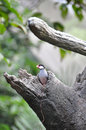 Java Sparrow In The Tree Hole Royalty Free Stock Images - 12621869