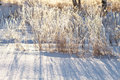 Frozen Grass Stock Photos - 12642633