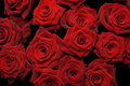 Bunch Of Red Roses Stock Photo - 12663980