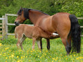 Feeding Foal Stock Images - 12679654
