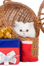 Kitten In The Rattan Carrier Royalty Free Stock Image - 12681706