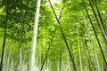 Bamboo Grove In China Stock Images - 12699604
