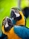 Beautiful Colorful Parrot Stock Images - 12707114