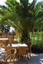 Tropical Cafe  With Palm Tree Exterior Royalty Free Stock Images - 12715579