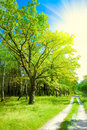 Forest Road Stock Image - 12721771