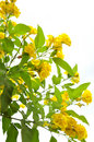 Yellow Flowers Stock Images - 12739884
