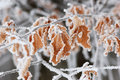 Frozen Leaf Royalty Free Stock Photography - 12748097