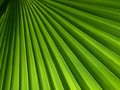 Green Palm Leaf Stock Image - 12750921