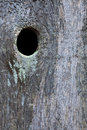 Wooden Fence With Knothole Royalty Free Stock Photos - 12753188