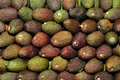 Avocados Royalty Free Stock Image - 12758116