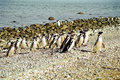 Penguins Marching Royalty Free Stock Images - 12759569