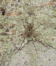 Spider Sitting On Tree Well Camouflaged. Royalty Free Stock Image - 12768406