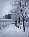 Snow Covered Path Stock Photography - 12784622
