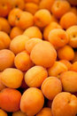 Fresh Apricots Royalty Free Stock Photography - 12797567