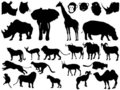 Collection Of African Animals Stock Photo - 12803570