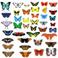 Collection Of Butterflies Stock Image - 12803621