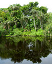 Forest Mirrored In A Lagoon On The Amazon Royalty Free Stock Images - 12830059