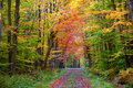 Autumn Walk Way Stock Image - 12876041