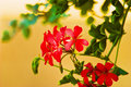Wild Flowers Royalty Free Stock Images - 12894699