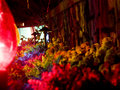 Plants Illuminated By Christmas Lights Royalty Free Stock Photography - 1292167