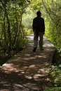 Man Walking In Forest Stock Photo - 1293490