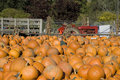 Pumpkin Patch Royalty Free Stock Photography - 1294057