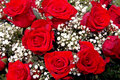 Red Roses Royalty Free Stock Photos - 1298698