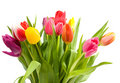 Bouquet Of Dutch Tulips Royalty Free Stock Photo - 12910825