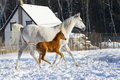 Mare And Foal Stock Photo - 12936770