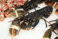 Lobsters Stock Image - 12938961