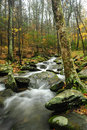 Fall In The Smoky Mountains Royalty Free Stock Photo - 12972555