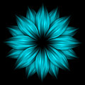 Abstract Sky Blue Flower On Black Background Stock Photo - 12980970