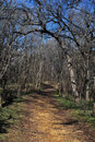 Woodland Path In Winter Royalty Free Stock Photography - 12992957