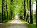 Forest Walking Path 1 Stock Image - 134121