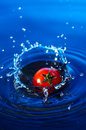 Cherry Tomato In Water Royalty Free Stock Photo - 1303385