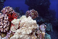 Coral Reef Stock Photo - 13049230
